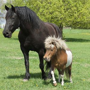 Was Ist Ein Pony